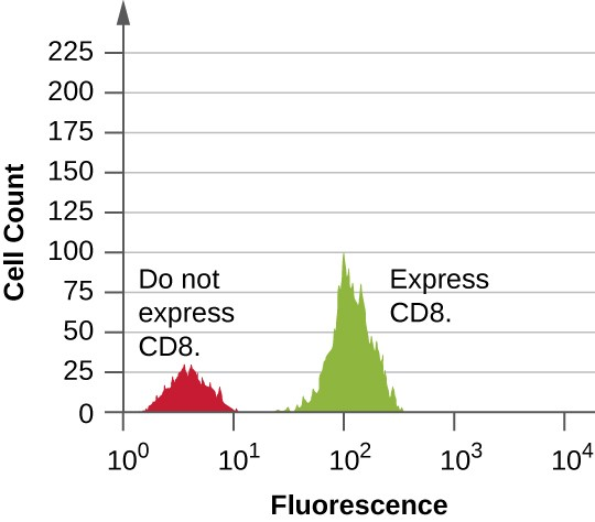 A graph with fluorescence on the X axis and Cell count on the Y axis. The first peak reaches approximately 30 and is labeled do not express CD8. The second peak reaches about 100 and is labeld do express CD8.