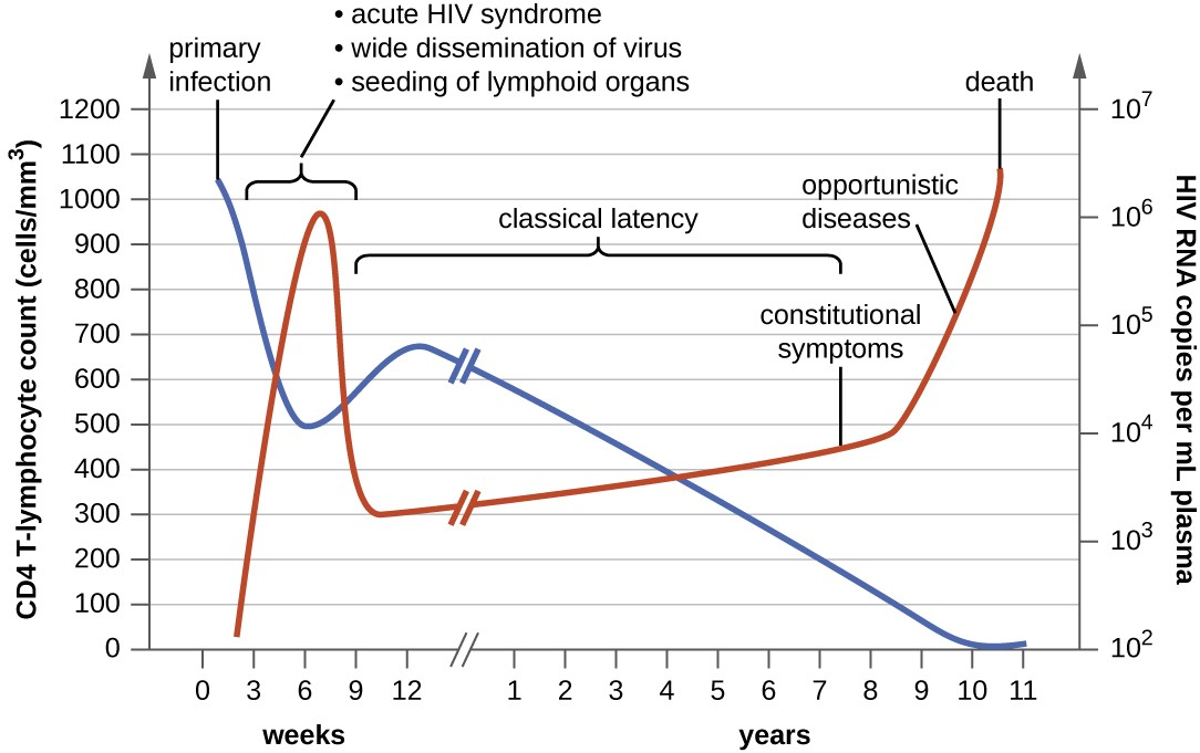 A graph with time on the X axis and two Y axes – CD4+ T lymphocyte count (cells/mm cubed) and HIV RNA copies per ml plasma. The primary infection is set at time 0 when there is a high CD4 count (over 1000) and a low RNA count (near 0). During the first weeks - macrophage infection, increase in virus production and HIV-1 reservoirs. At about 6 weeks – acute HIV syndrome, wide dissemination of virus, seeding of lymphoid organs. During this time the RNA count increases to about 10 to the 6 and the CD4 count decreases to about 500. From 9 weeks to about 12 weeks the CD4 count increases and the RNA count decreases. From 9 weeks to about 7 years is classic latency – T-cell depletion/immune dysfunction and neurocognitive impairment. During this time CD4 count steadily decreases to near 0 and RNA count steadily increases to over 10 to the 6. Constitutional symptoms occur at about 8 years. After this, opportunistic diseases occur; HIV-D and HIVAN. Then death.