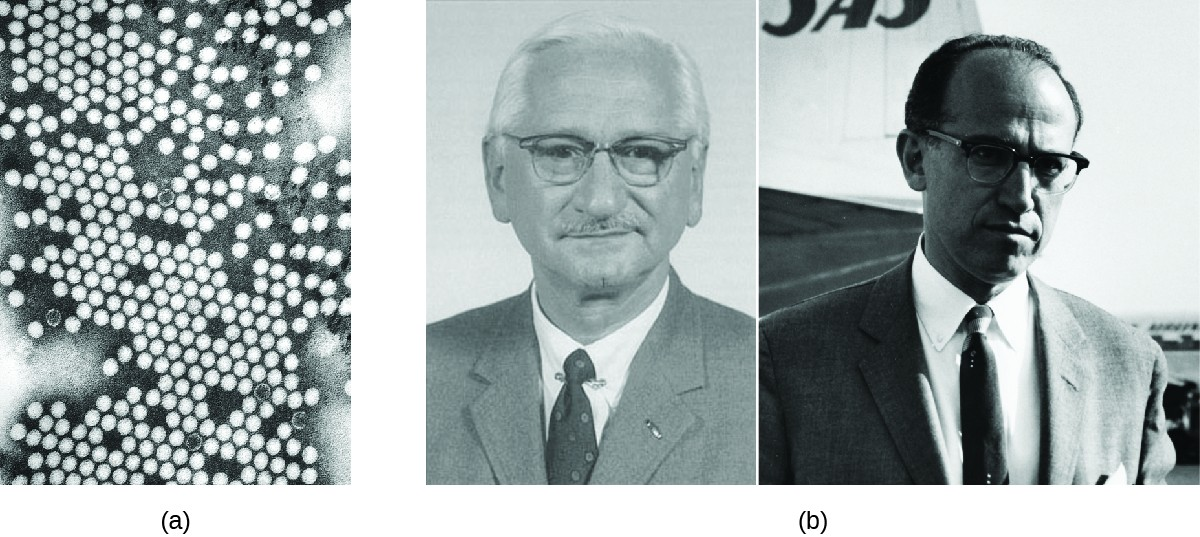 a) Micrograph of many circles. B) Photos of Albert Sabin and Jonas Salk.