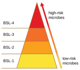 Risk factor pyramid. BSL-1 is classified as a low-risk microbes. BSL-2 and BSL-3 are on a scale up to BSL-4, which are classified as high-risk microbes.