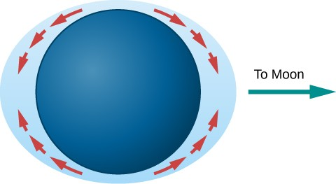 Tidal Bulges. In this illustration, the Earth is drawn as a dark blue disk within a light blue ellipse representing the oceans. The perimeter of the ellipse comes closest to the Earth's surface at the poles and is furthest away at the equator. Red arrows are drawn showing the flow of water from the poles to the equatorial bulges. An arrow points from the right-hand bulge toward the right and is labeled