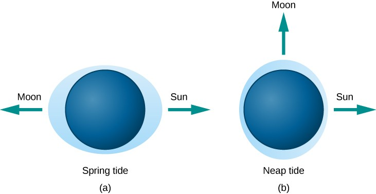 Tides Caused by Different Alignments of the Sun and Moon. In this illustration, the Earth is drawn as a dark blue disk within a light blue ellipse representing the oceans. In panel (a), at left and labeled