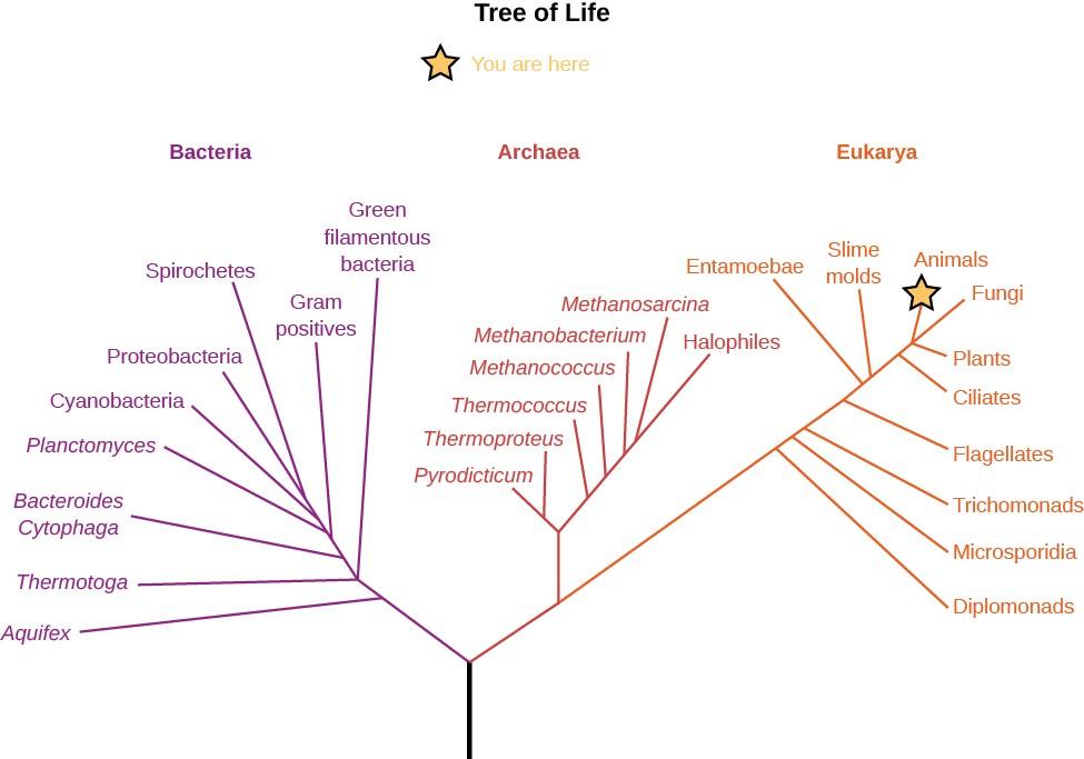 A line chart titled
