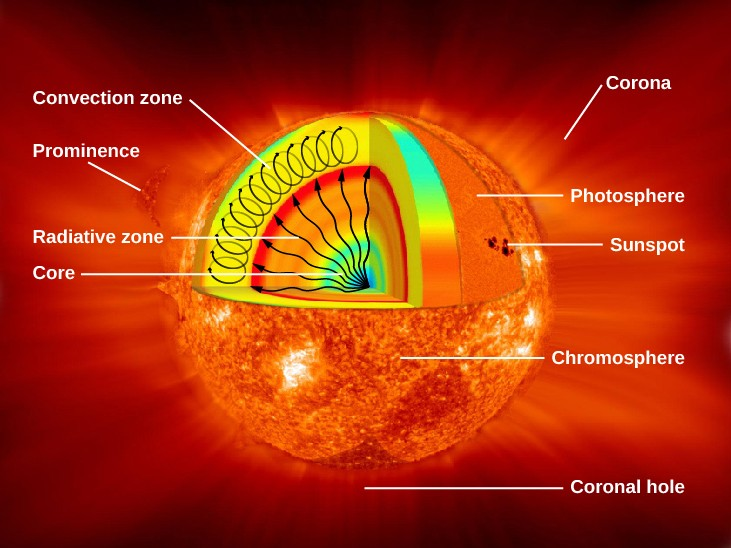 The structure and composition of the sun astronomy interior structure of the sun in this cutaway illustration of the sun a triangular ccuart