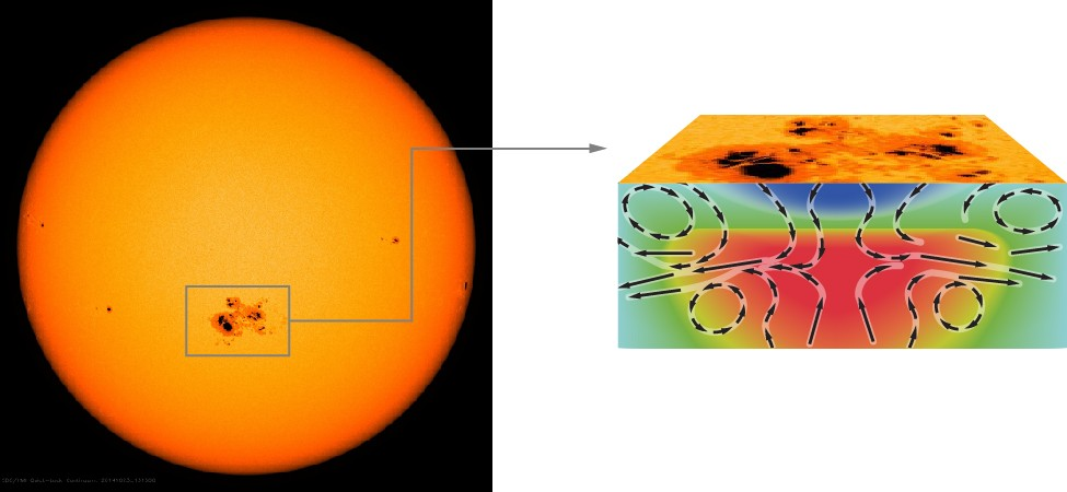 Structure of a Sunspot. The figure on the left is an image of the Sun is visible light. A box is drawn around a large sunspot complex below center, with an arrow drawn from the box toward the diagram on the right. The region bounded by the box is shown in profile on the right, illustrating what is occurring beneath the sunspot. The cooler gas of the sunspot is shown in blue at the top of the illustration. A plume of hot gas, shown in red, is rising and expanding upward toward the sunspot. Black arrows are drawn indicating the direction of flow of the material. The arrows point downward through the blue sunspot indicating that the cooler gas is sinking. Arrows point upward in the rising red plume. Where the arrows meet they move outward toward the right and left edges of the figure. Thus, as the rising plume meets the bottom of the sinking sunspot, the upward motion is blocked and the hot gas moves sideways away from the sunspot.