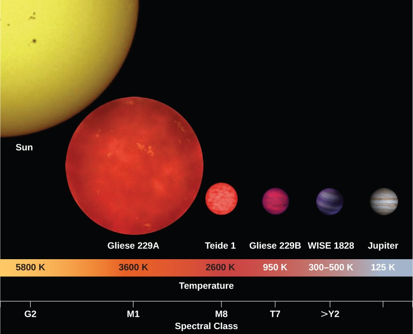 Figure illustrating the relative sizes and temperatures of brown dwarf stars compared to the Sun, a red dwarf and Jupiter. At bottom is a spectral class / temperature scale for the stars plotted. From left: G2 / 5800 K for the Sun, M1/ 3600 K for red dwarf Gliese 229A, M8 / 2600 K for brown dwarf Teide 1, T7 / 950 K for brown dwarf Gliese 229B, >Y2 / 300-500 K for WISE1828, and no spectral type / 125 K for Jupiter. The main portion of the figure shows the stars to scale, with the Sun by far the largest, followed by Gliese 229A being about ½ the size of the Sun, then Teide 1, Gliese 229B, and WISE1828, each being about the size of Jupiter.