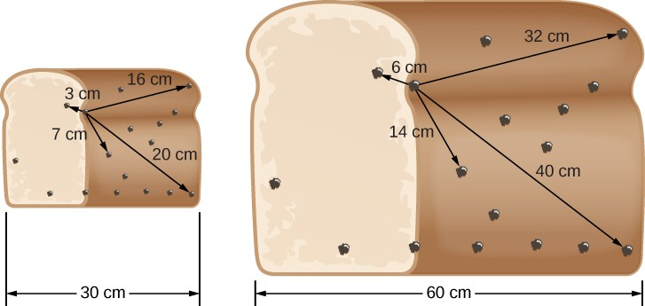 Expanding Raisin Bread. In this illustration, the loaf of raisin bread at left is 30 cm wide. Arrows are drawn from a