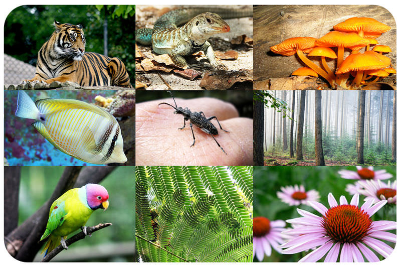 A photo collage of a tiger, a lizard, mushrooms, a fish, an ant, trees, a parrot, pine needles, and a flower.