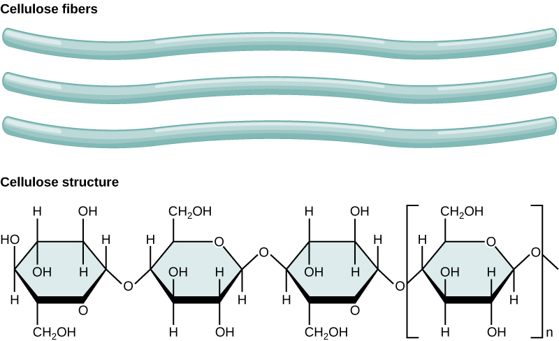 Structure and function of carbohydrates biology for majors i the chemical structure of cellulose is shown cellulose consists of unbranched chains of glucose subunits ccuart Image collections