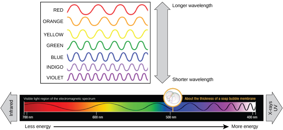 The Illustration Shows Colors Of Visible Light In Order Decreasing Wavelength These