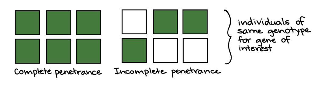 Complete penetrance: all six squares are dark green. Incomplete penetrance: three of the squares are dark green, and three of the squares are white. The squares in each example are intended to represent individuals of the same genotype for the gene of interest.