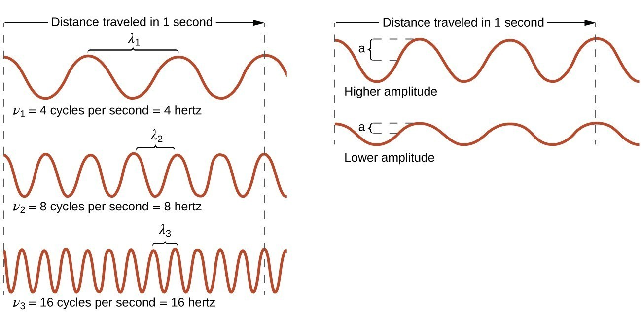 """This figure includes 5 one-dimensional sinusoidal waves in two columns. The column on the left includes three waves, and the column on the right includes two waves. In each column, dashed vertical line segments extend down the left and right sides of the column. A right pointing arrow extends from the left dashed line to the right dashed line in both columns and is labeled, """"Distance traveled in 1 second."""" The waves all begin on the left side at a crest. The wave at the upper left shows 3 peaks to the right of the starting point. A bracket labeled, """"lambda subscript 1,"""" extends upward from the second and third peaks. Beneath this wave is the label, """"nu subscript 1 equals 4 cycles per second equals 4 hertz."""" The wave below has six peaks to the right of the starting point with a bracket similarly connecting the third and fourth peaks which is labeled, """"lambda subscript 2."""" Beneath this wave is the label, """"nu subscript 2 equals 8 cycles per second equals 8 hertz."""" The third wave in the column has twelve peaks to the right of the starting point with a bracket similarly connecting the seventh and eighth peaks which is labeled, """"lambda subscript 3."""" Beneath this wave is the label, """"nu subscript 3 equals 12 cycles per second equals 12 hertz."""" All waves in this column appear to have the same vertical distance from peak to trough. In the second column, the two waves are similarly shown, but lack the lambda labels. The top wave in this column has a greater vertical distance between the peaks and troughs and is labeled, """"Higher amplitude."""" The wave beneath it has a lesser distance between the peaks and troughs and is labeled, """"Lower amplitude."""""""