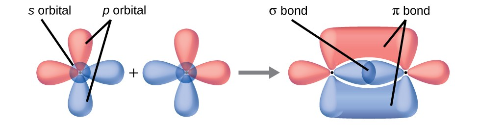 This figure shows the orbitals of two atoms being added together as they form bonds. The two atoms are shown separately on the right, each having two peanut-shaped orbitals lying perpendicularly to one another. A right-facing arrow shows that the two have moved closer together and now the upper and lower portions of the vertical peanut-shaped orbitals are shown as merging together above and below the plane of the molecule while the horizontal peanut-shaped orbitals are overlapping between the two nuclei.