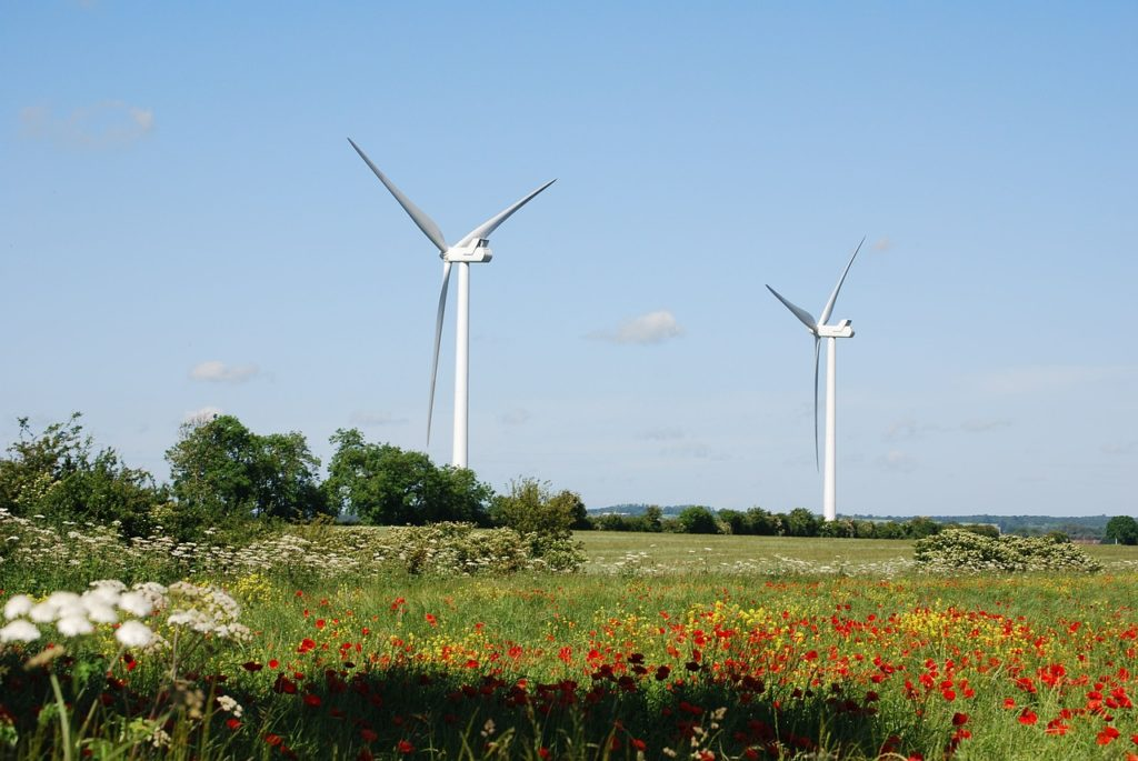 two wind turbines in a field of flowers and low trees