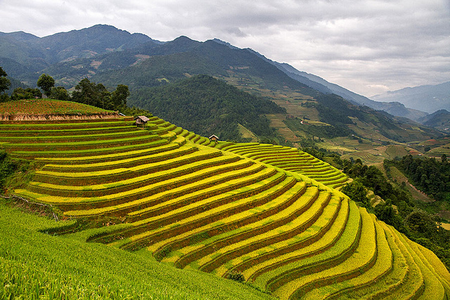 terraced hillside of rice paddies