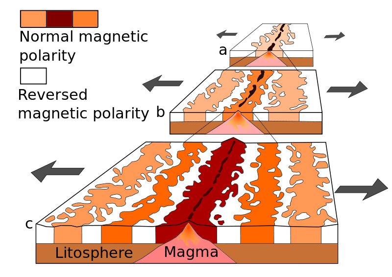 A theoretical model of the formation of magnetic striping. New oceanic crust forming continuously at the crest of the mid-ocean ridge cools and becomes increasingly older as it moves away from the ridge crest with seafloor spreading: a. the spreading ridge about 5 million years ago. b. about 2 to 3 million years ago. c. present-day
