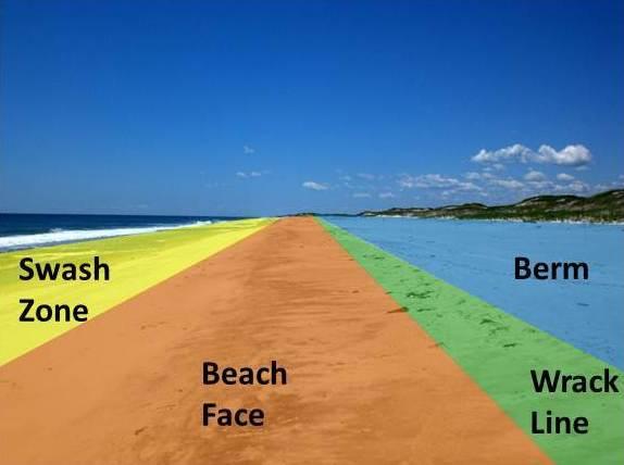 beaches of the gulf coast jr davis richard a