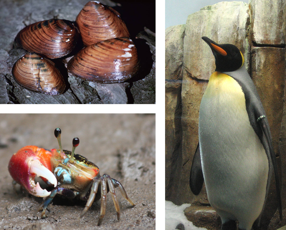The photo collage shows mollusks, a crab, and, a penguin.