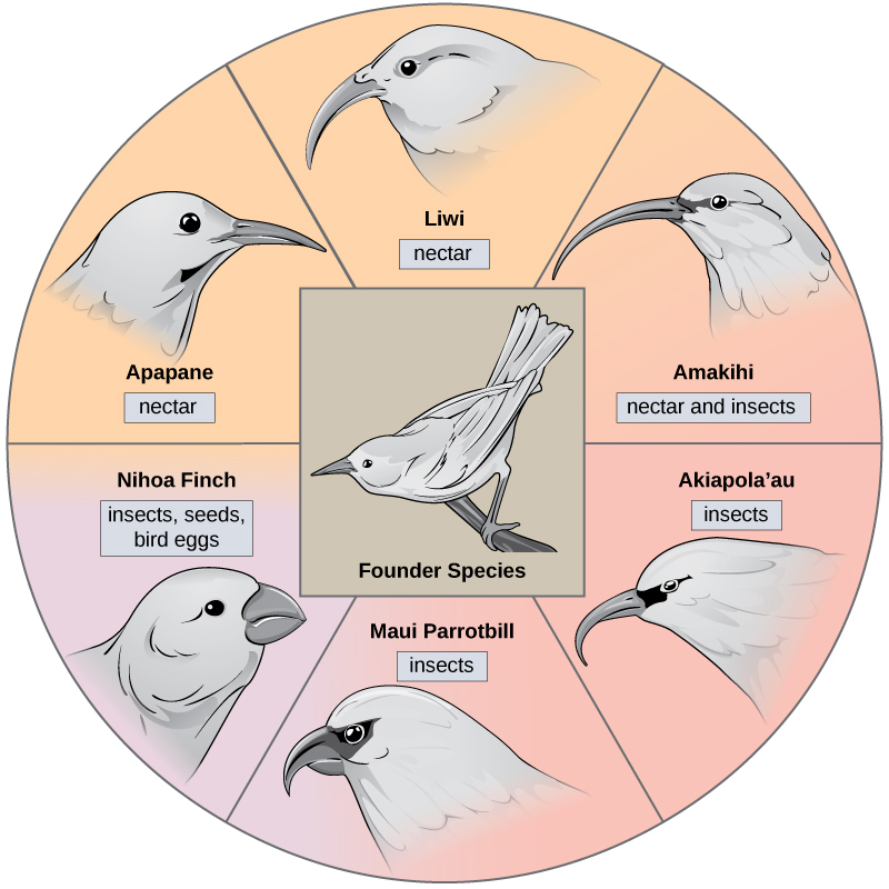 Types Of Speciation Biology For Majors Ii