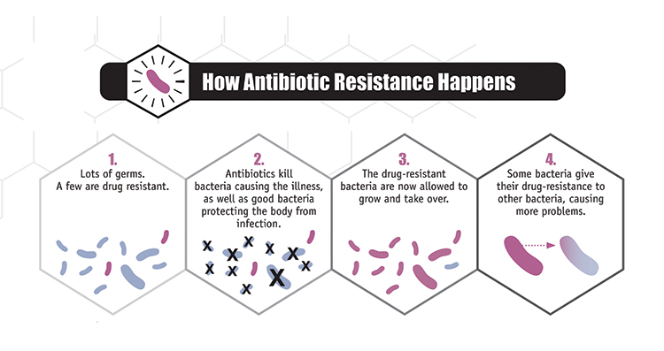 An infographic depicting how antibiotic resistance happens. First, there are a lot of germs, and just a few are drug resistant. Second, antibiotics kill the bacteria causing illness, as well as good bacteria that protect the body from infection. Third, the drug-resistant bacteria are now allowed to grow and take over. Finally, some bacteria give their drug resistance to other bacteria, causing more problems.