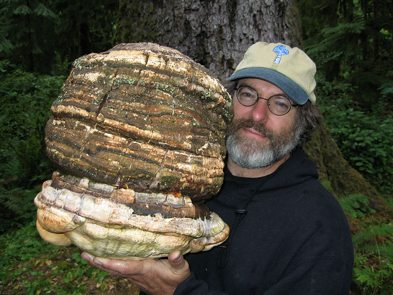 Stamets is holding a large mushroom that is approximately twice the size of his head.