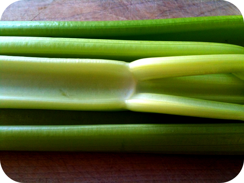 photograph of celery