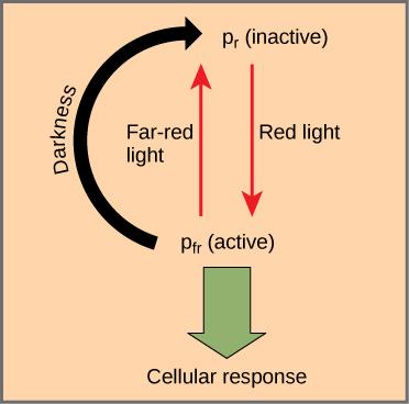Plant Responses To Light Biology For Majors Ii