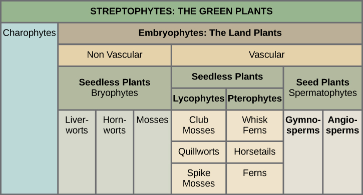 Seedless Plants | Biology for Majors II