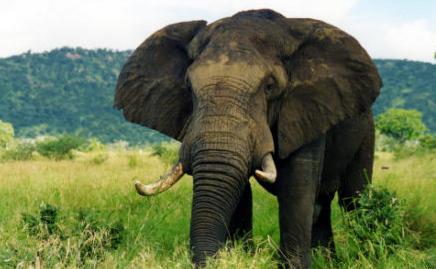 A photo of an elephant