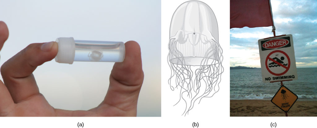 Photo A Shows Person Holding Small Vial With White Jelly Inside The Figure 7