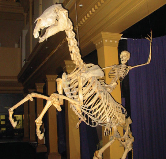 Photo shows a human skeleton riding a bucking horse skeleton.