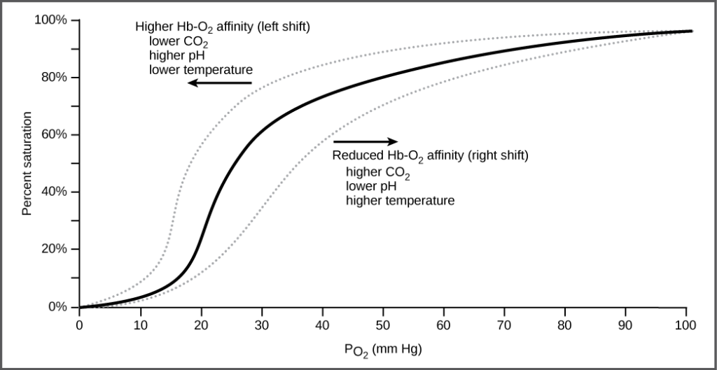 The graph plots percent oxygen saturation of hemoglobin as a function of oxygen partial pressure. Oxygen saturation increases in an S-shaped curve, from 0 to 100 percent. The curve shifts to the left under conditions of low carbon dioxide, high pH, and low temperature, and to the right in conditions of high carbon dioxide, low pH, or high temperature.