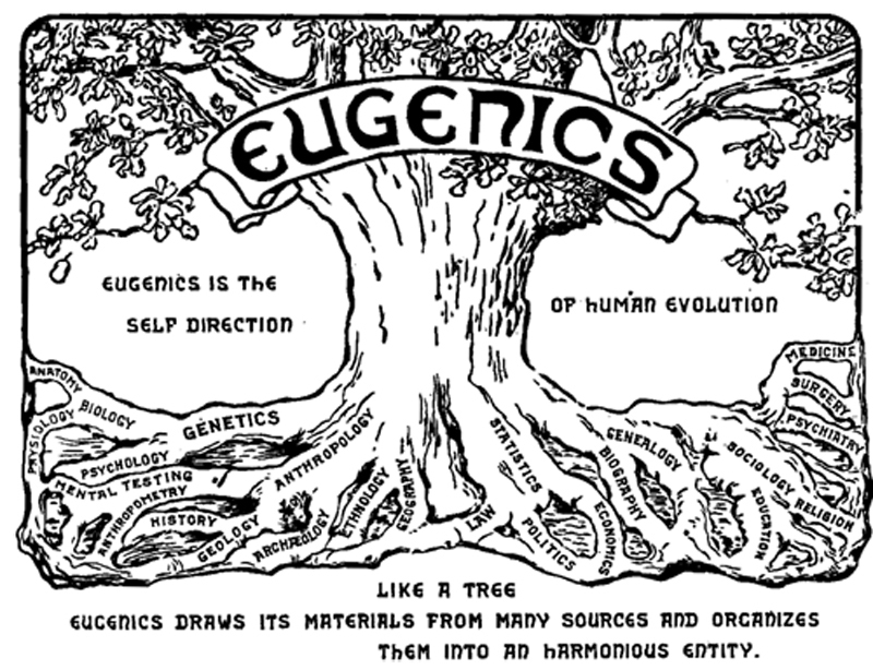 "Illustration shows a tree with words such as genetics, statistics, medicine, economics, and genealogy associated with the roots. The word eugenics is emblazoned across the upper trunk. To the side of the tree is the text ""Eugenics is the self-direction of human evolution."""