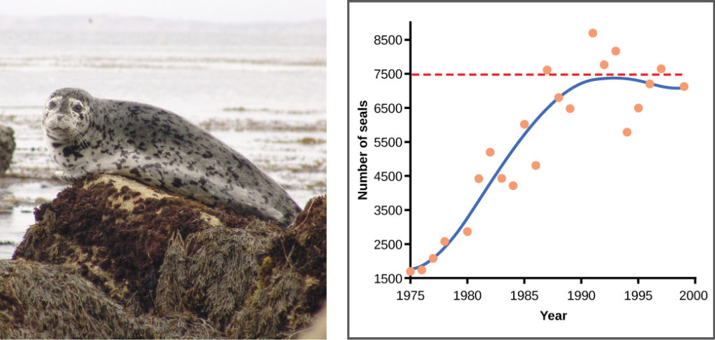 Graph plots the number of harbor seals versus time in years. Again, the curve rises steeply then plateaus at the carrying capacity, but this time there is much more scatter in the data. A micrograph of yeast cells, which are oval in shape, and a photo of a harbor seal are shown.