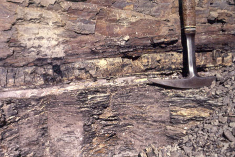 Photo shows sedimentary rock with a distinct white band in the middle representing the K–Pg boundary. The rock below this layer, which has fine bands of dark and light gray, is distinct in appearance from the smoother, redder rock above.
