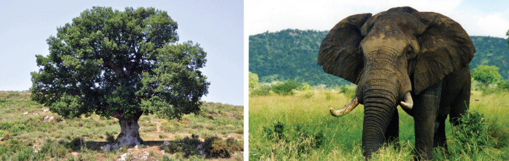 K-selected species, shows photos of an oak tree and an elephant.