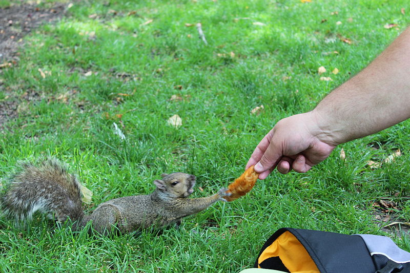 A man feeding a squirrel a french fry