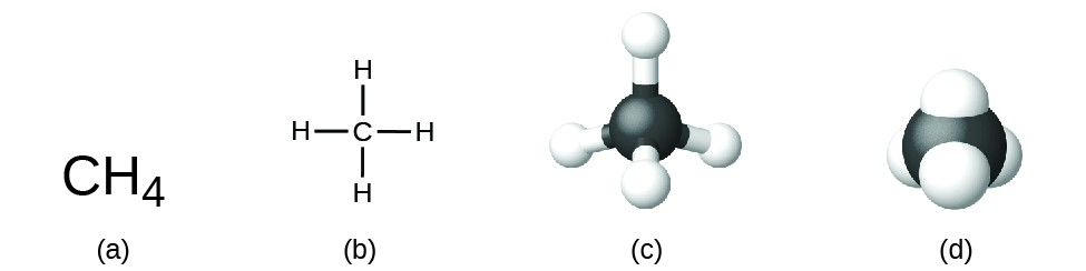 Figure A shows C H subscript 4. Figure B shows a carbon atom that is bonded to four hydrogen atoms at right angles: one above, one to the left, one to the right, and one below. Figure C shows a 3-D, ball-and-stick model of the carbon atom bonded to four hydrogen atoms. Figure D shows a space-filling model of a carbon atom with hydrogen atoms partially embedded into the surface of the carbon atom.