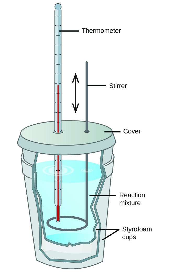 """Two Styrofoam cups are shown nested in one another with a cover over the top. A thermometer and stirring rod are inserted through the cover and into the solution inside the cup, which is shown as a cut-away. The stirring rod has a double headed arrow next to it facing up and down. The liquid mixture inside the cup is labeled """"Reaction mixture."""""""
