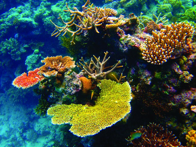 This picture shows colorful underwater corals and anemones in hues of yellow, orange, green, and brown, surrounded by water that appears blue in color.