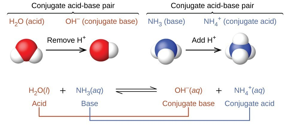 """This figure has three parts in two rows. In the first row, two diagrams of acid-base pairs are shown. On the left, a space filling model of H subscript 2 O is shown with a red O atom at the center and two smaller white H atoms attached in a bent shape. Above this model is the label """"H subscript 2 O (acid)"""" in purple. An arrow points right, which is labeled """"Remove H superscript plus."""" To the right is another space filling model with a single red O atom to which a single smaller white H atom is attached. The label in purple above this model reads, """"O H superscript negative (conjugate base)."""" Above both of these red and white models is an upward pointing bracket that is labeled """"Conjugate acid-base pair."""" To the right is a space filling model with a central blue N atom to which three smaller white H atoms are attached in a triangular pyramid arrangement. A label in green above reads """"N H subscript 3 (base)."""" An arrow labeled """"Add H superscript plus"""" points right. To the right of the arrow is another space filling model with a blue central N atom and four smaller white H atoms in a tetrahedral arrangement. The green label above reads """"N H subscript 3 superscript plus (conjugate acid)."""" Above both of these blue and white models is an upward pointing bracket that is labeled """"Conjugate acid-base pair."""" The second row of the figure shows the chemical reaction, H subscript 2 O ( l ) is shown in purple, and is labeled below in purple as """"acid,"""" plus N H subscript 3 (a q) in green, labeled below in green as """"base,"""" followed by a double sided arrow arrow and O H superscript negative (a q) in purple, labeled in purple as """"conjugate base,"""" plus N H subscript 4 superscript plus (a q)"""" in green, which is labeled in green as """"conjugate acid."""" The acid on the left side of the equation is connected to the conjugate base on the right with a purple line. Similarly, the base on the left is connected to the conjugate acid on the right side."""