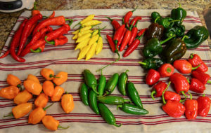 Piles of different hot peppers