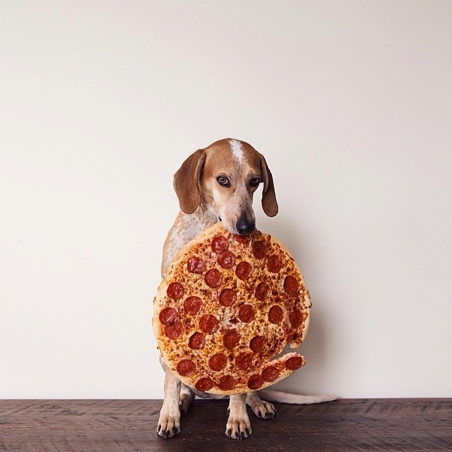 Photo of a dog with the side of a whole pizza in its teeth.