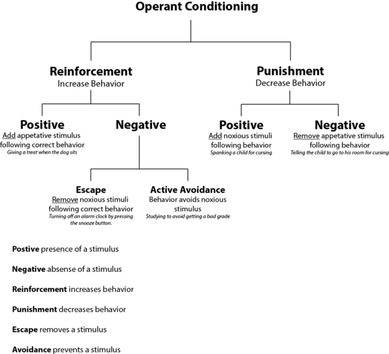 A tree chart showing operant conditioning at the top, with two children: reinforcement and punishment. Under reinforcement are positive and negative. Negative is split into escape and active avoidance. Under punishment are positive and negative.
