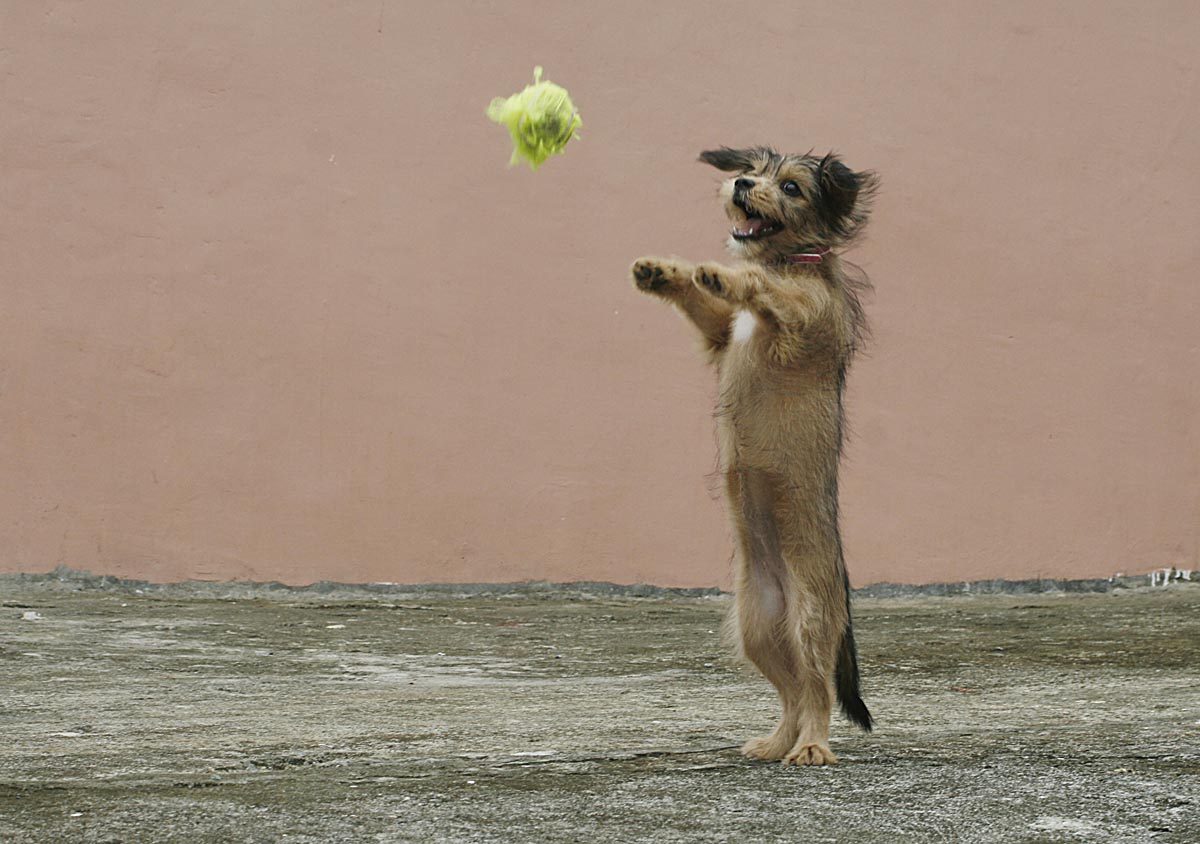 small dog doing a trick