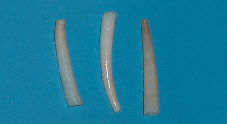 The photo shows white shells shaped like tusks.