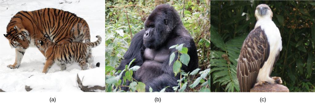 Photos show a wolf (a), a gorilla (b), and an eagle (c).