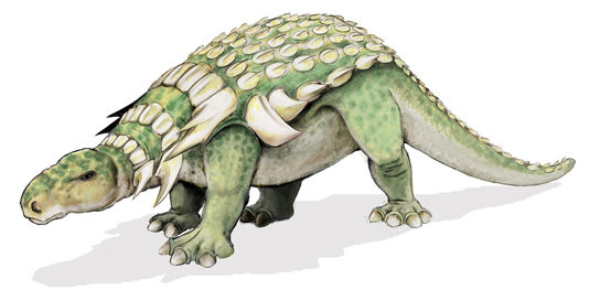 The illustration shows a dinosaur that walks on four legs, has a long tail, and an armored back.