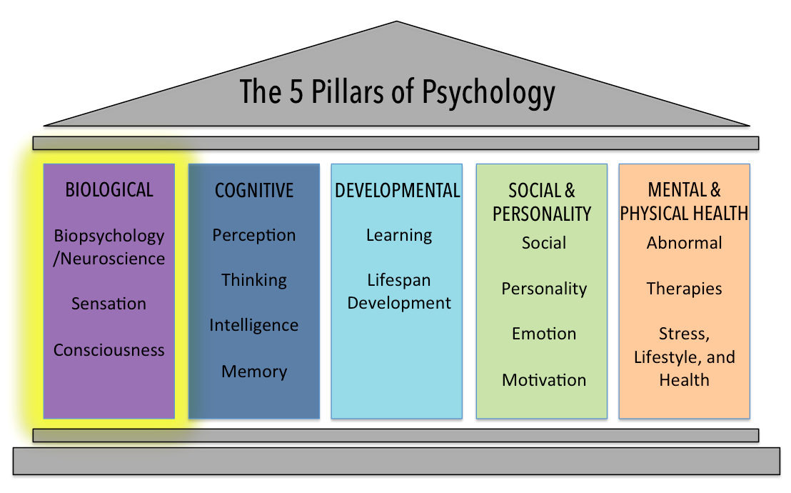 Image of five pillars, showing the biological, cognitive, developmental, social and personality, and mental and physical health.