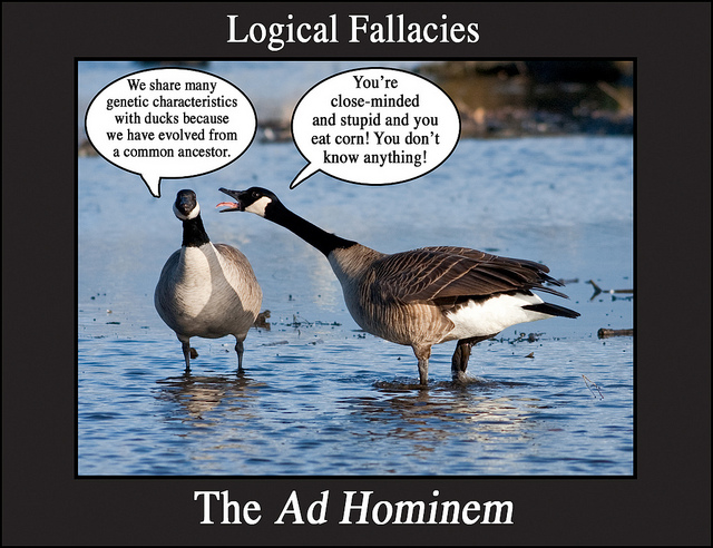 Titled Logical Fallacies: The Ad Hominem. Two Canada geese stand in water. One, facing the camera, has a dialogue bubble: We share many genetic characteristics with ducks because we have evolved from a common ancestor. The other, facing the first goose, squawks at it with mouth open, tongue extended. It's dialogue bubble: You're close-minded and stupid and you eat corn! You don't know anything!